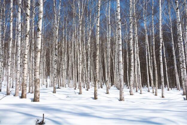 Clarol Nordic Birch & Willow Primer 30ml